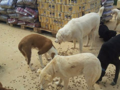SOS-Futterspende-Hunde-Italien