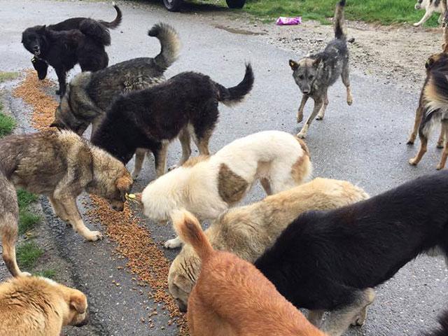 Tierschutz-Shop Transparenz Spendenankunft Hilfe für vergessene Waisenkinder und Fellnasen