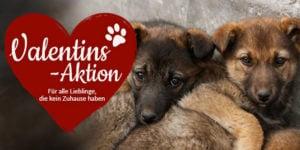 valentins-aktion-fb-teilen-bild