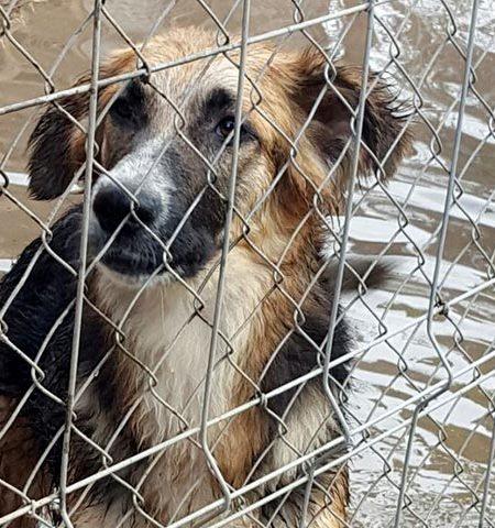 Denia Dogs Tierschutz-Shop Futter-Spendenplattform