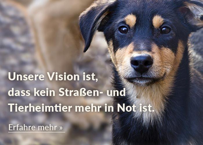 Homepage-Titelbild-Hund-Mobil