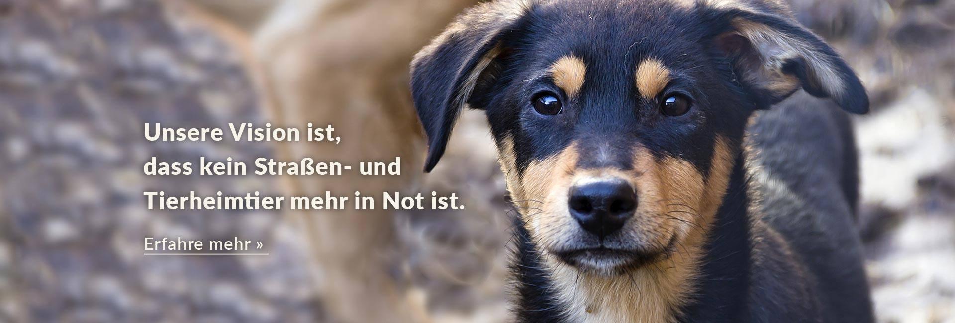 Homepage-Titelbild-Hund