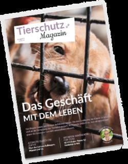 Magazin-Ausgabe-6-
