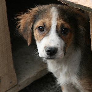 Tierschutz-Shop-Europas-Spendenplattform-THdM-Tierhilfe-Weyarn-Wunschliste-2