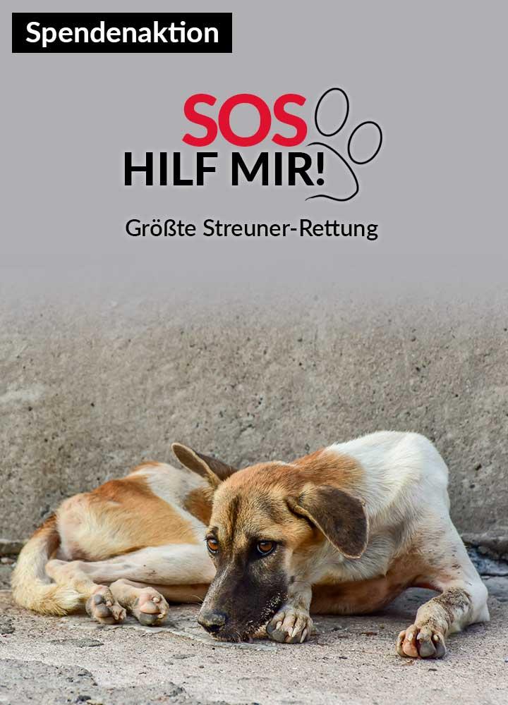 Tierschutz-Shop-Groesste-Streuner-Rettung-Aktion-Homepage-Mobil-V1