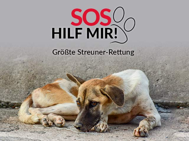 Tierschutz-Shop-Groesste-Streuner-Rettung-Aktion-Landingpage-640x480-v2