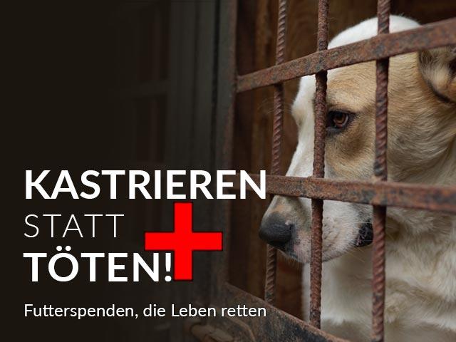 Tierschutz-Shop-Kastreiern-statt-toeten-Aktion-Landingpage_640x480-V2