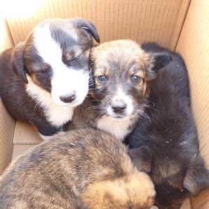 Tierschutz-Shop-Spendenplattform-Hundehilfe-Italien