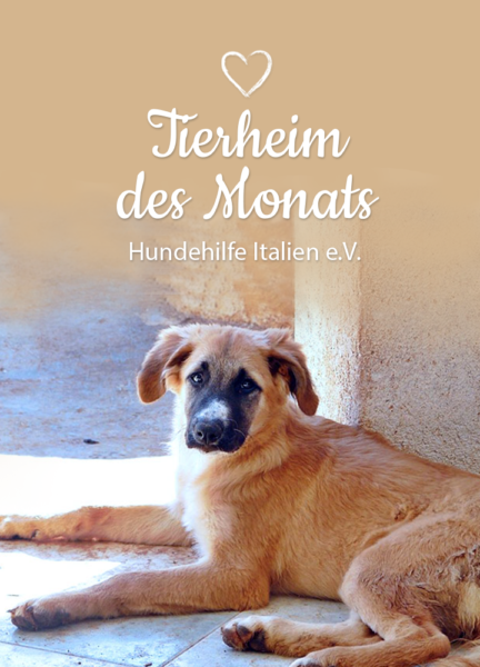 Tierschutz-Shop-Spendenplattform-THdM-HP-Hundehilfe-Italien-mobil2