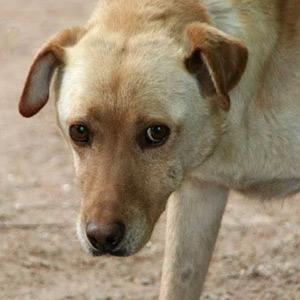 Tierschutz-Shop-Spendenplattform-THdM-Pfotenhilfe-Ungarn