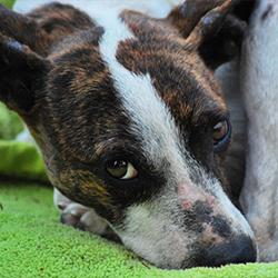 Tierschutz-Shop-Spendenplattform-Teffi-PfT-Banner-Teffi-WL-Bild-HP