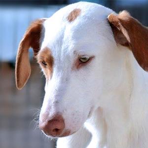 Tierschutz-Shop-Spendenplattform-Tierheim-des-Monats-Maerz-Denia-Dogs-HP