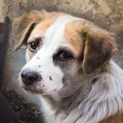 Tierschutz-Shop-Spendenplattform-Wunschliste-Hope-and-Liberty