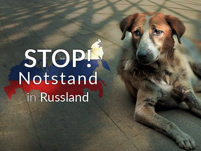Tierschutz-Shop-Tierheim-des-Monats-Russland-Landingpage_640x480-V3