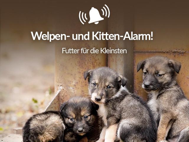 Tierschutz-Shop__Welpen_und_Kitten_Alarm_2019_Bild_Homepage_Desktop_640x480