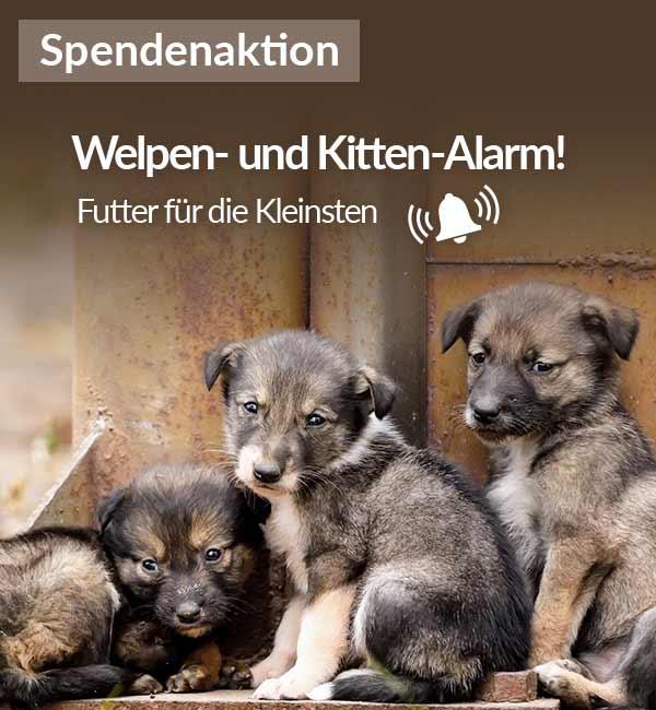 Tierschutz-Shop__Welpen_und_Kitten_Alarm_2019_Bild_Homepage_Mobil_720x1000