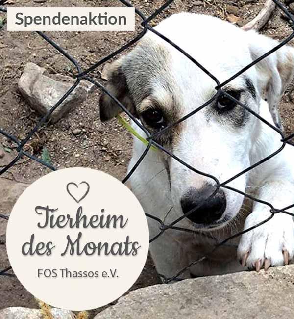 Tierschutz_Shop_Spendenplattform_THdM_FOS_Thassos_Maerz_2019