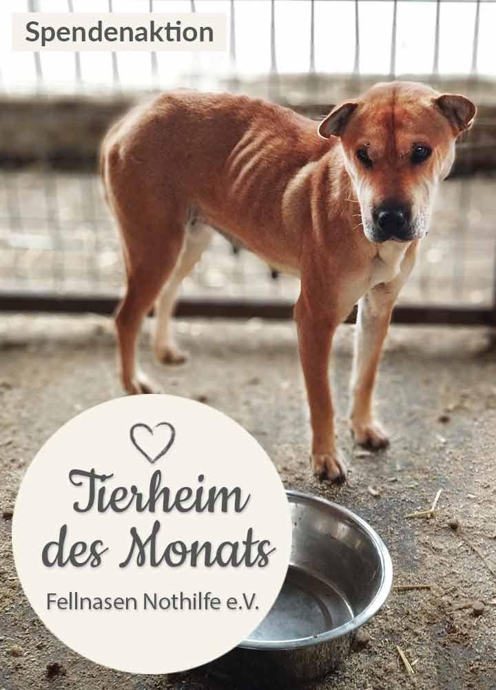 Tierschutz_Shop_Spendenplattform_THdM_Fellnasen_Nothilfe_Januar_2019_Homepage_Mobil_720x1000