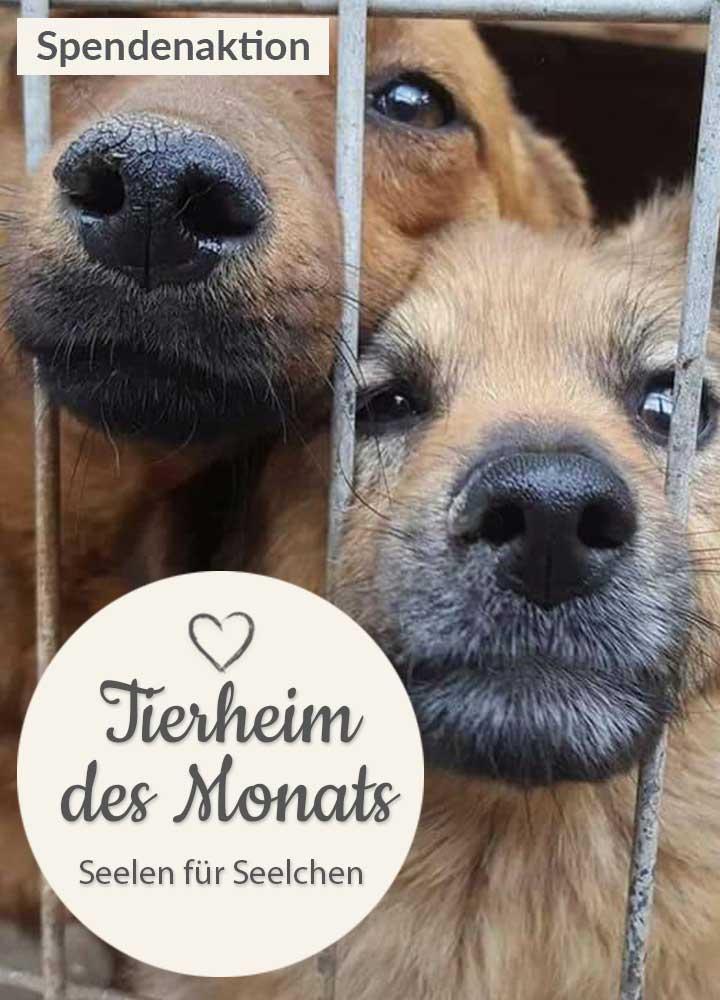 Tierschutz_Shop_Spendenplattform_THdM_Seelen