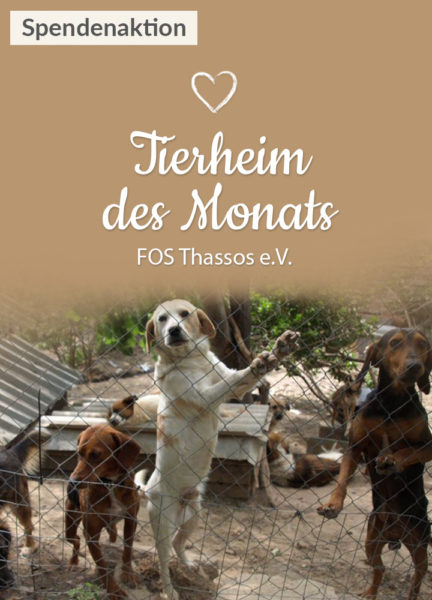 Tierschutz_Shop_Spendenplattform_THdM_Thassos_September_2017_HP_mobil