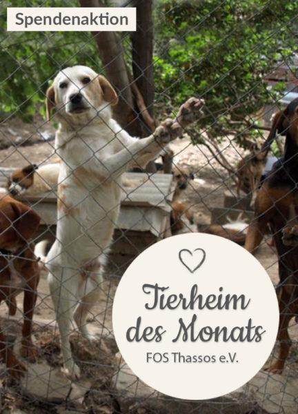Tierschutz_Shop_Spendenplattform_THdM_Thassos_September_2017_HP_mobil2