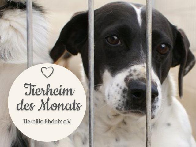 Tierschutz_Shop_Spendenplattform_THdM_Tierhilfe_Phoenix-eV_Juli_2018_HP_640x480