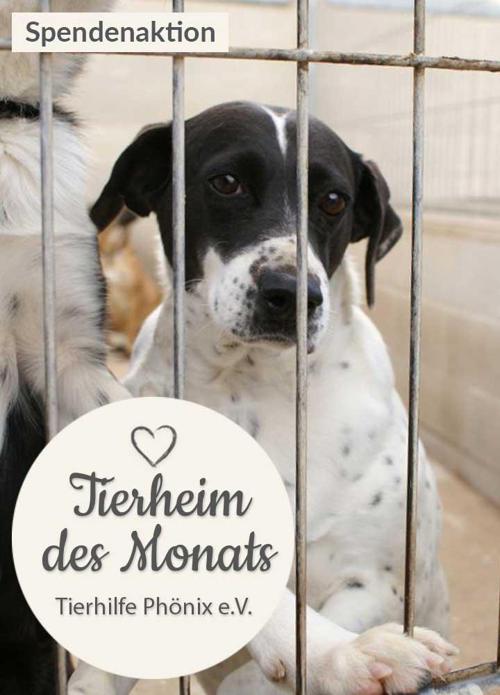 Tierschutz_Shop_Spendenplattform_THdM_Tierhilfe_Phoenix-eV_Juli_2018_HP_mobil