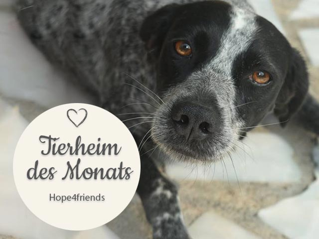 Tierschutz_Shop_Spendenplattform_THdM_hope4friedns_oktober_2018_HP_640x480