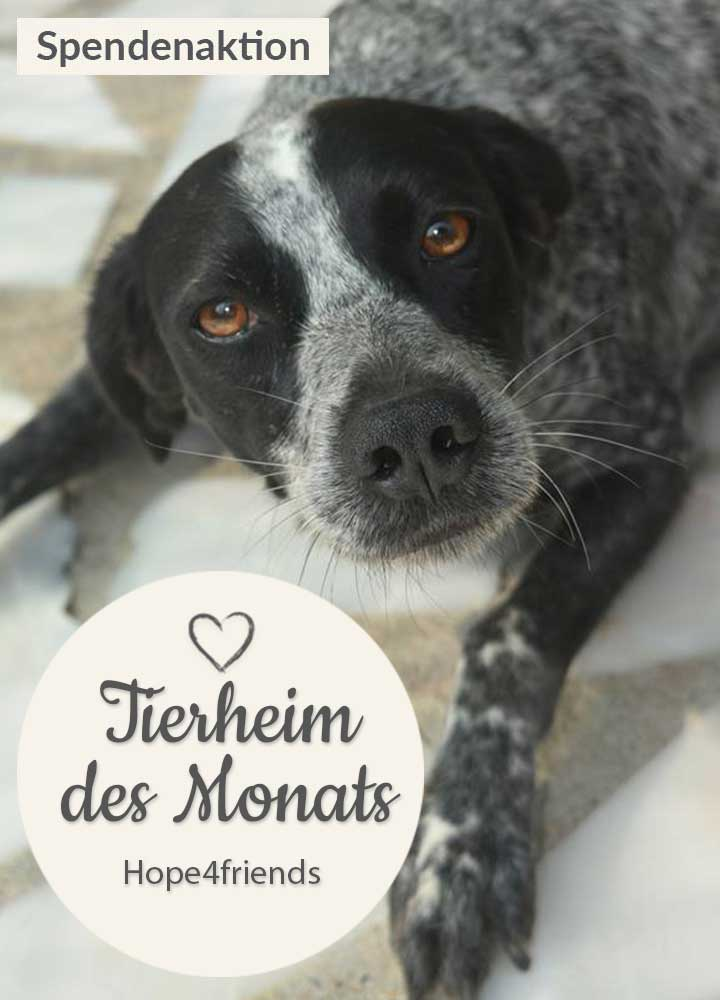 Tierschutz_Shop_Spendenplattform_THdM_hope4friedns_oktober_2018_HP_mobil