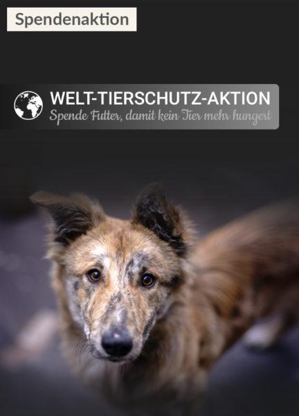 Tierschutz_Shop_Spendenplattform_Welttierschutztag_2017_Homepage_mobil