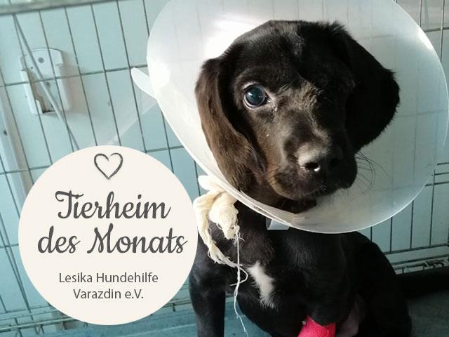 Tierschutz_Shop_THdM_Lesika_Hundehilfe_Mai_2019_Homepage_Desktop