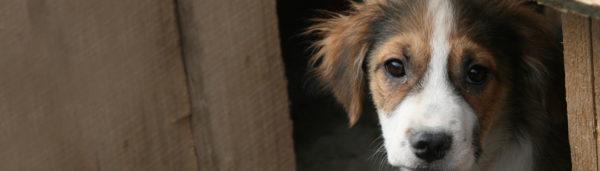 Tierschutz-Shop Tierhilfe Weyarn