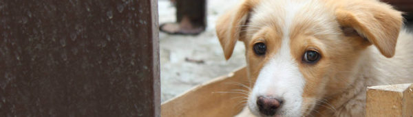 Ray of Hope Tierheim des Monats Tierschutz-Shop Futter-Spendenplattform