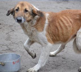 Tierschutz-Shop-Spendenplattform-Magazin-Artikel-Tiere-im-Krieg2