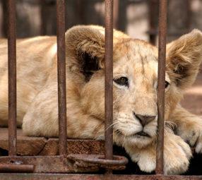 Tierschutz-Shop-Spendenplattform-Magazin-Artikel-tierische-Urlaubsattraktionen-1