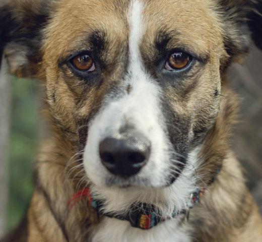 Tierschutz-Shop Futter-Spendenplattform Initiative Hilfe für Labortiere