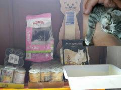 Tierhilfe-Kleine-Pfote-e.V.