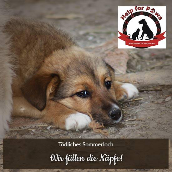 Help-for-Paws-Stuttgart-e.V