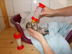 Katzenhilfe-Hoyerswerda-2