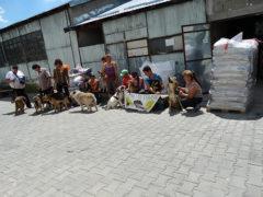 Tierhilfe-Hoffnung-e.V.-1