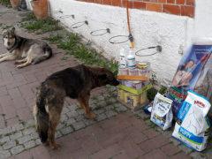 Tierschutzhunde-Russland