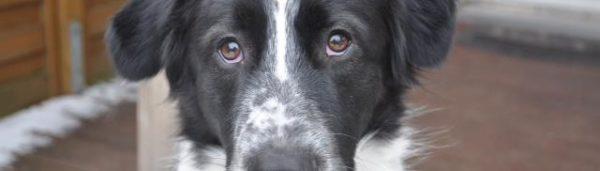 Hundehilfe Italien (22)