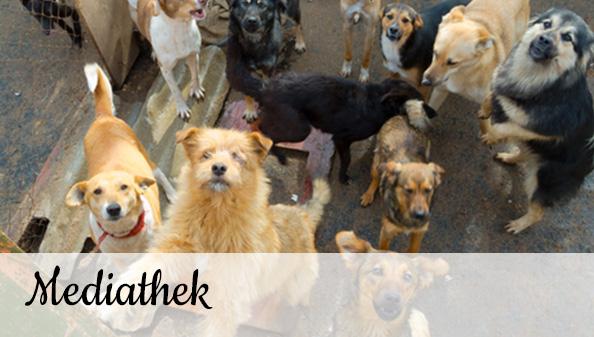 Tierschutz-Shop Mediathek