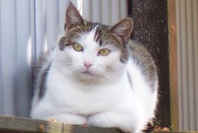 Verein-Kachel-Katzenhilfe-Hoyerswerda