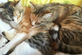 Verein-Kachel-Katzenhilfe-Katzenherzen