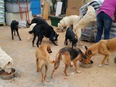 Spendenankunft Hundehilfe Italien 2