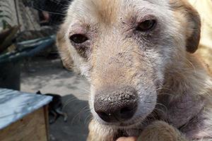 Pentru-Animale-Welt-Tierschutz-Aktion