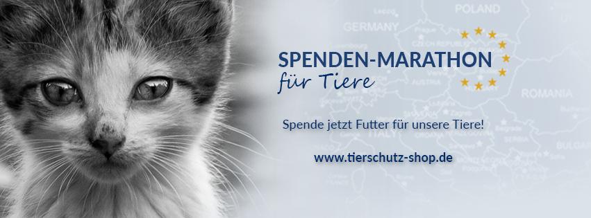 Spendenmarathon_für Tiere_Facebook_Titelbild_Katze_2017