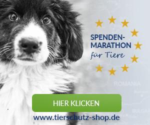 Spendenmarathon_für_Tiere_Affilinet_300x250_Hund_2017
