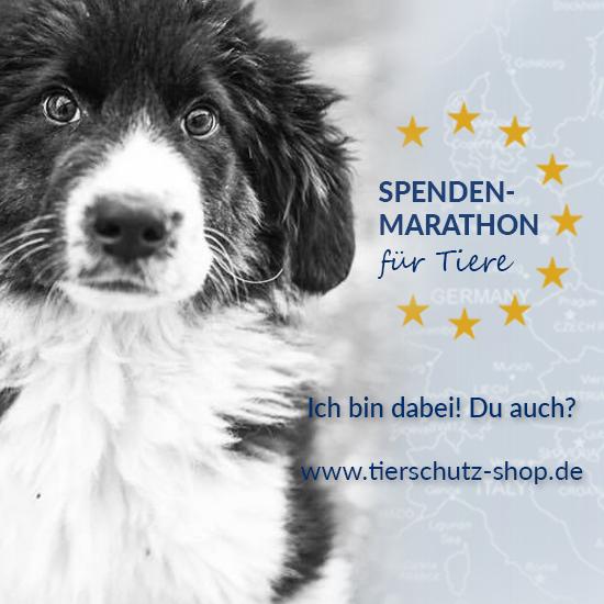 Spendenmarathon_für_Tiere_Facebook_Profilbild_Hund_2017